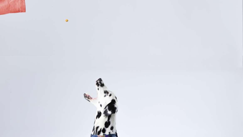Podstawowe kroki nauki psa posłuszeństwa